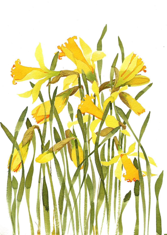 Daffodils image