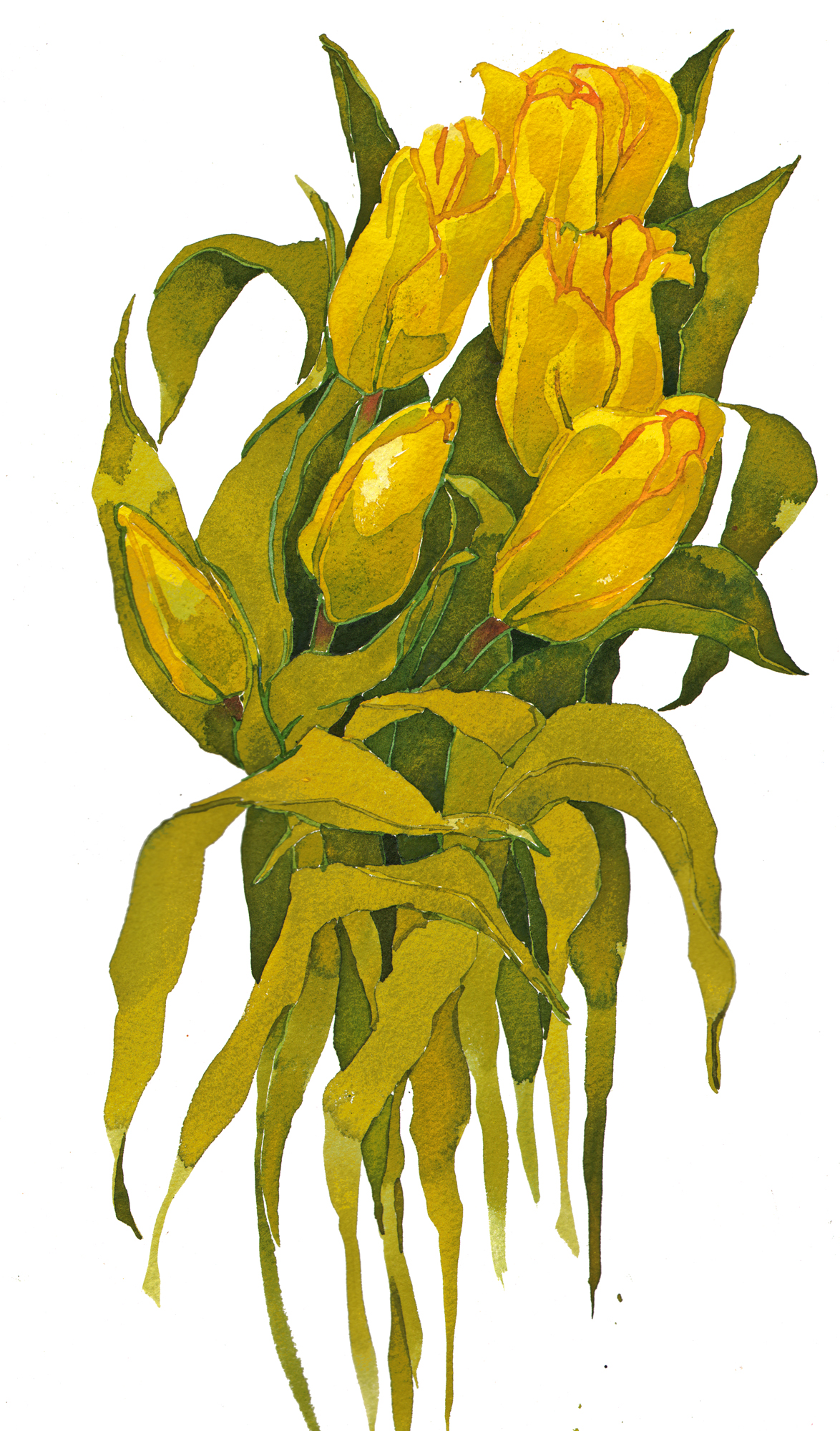 Yellow Tulips, New image
