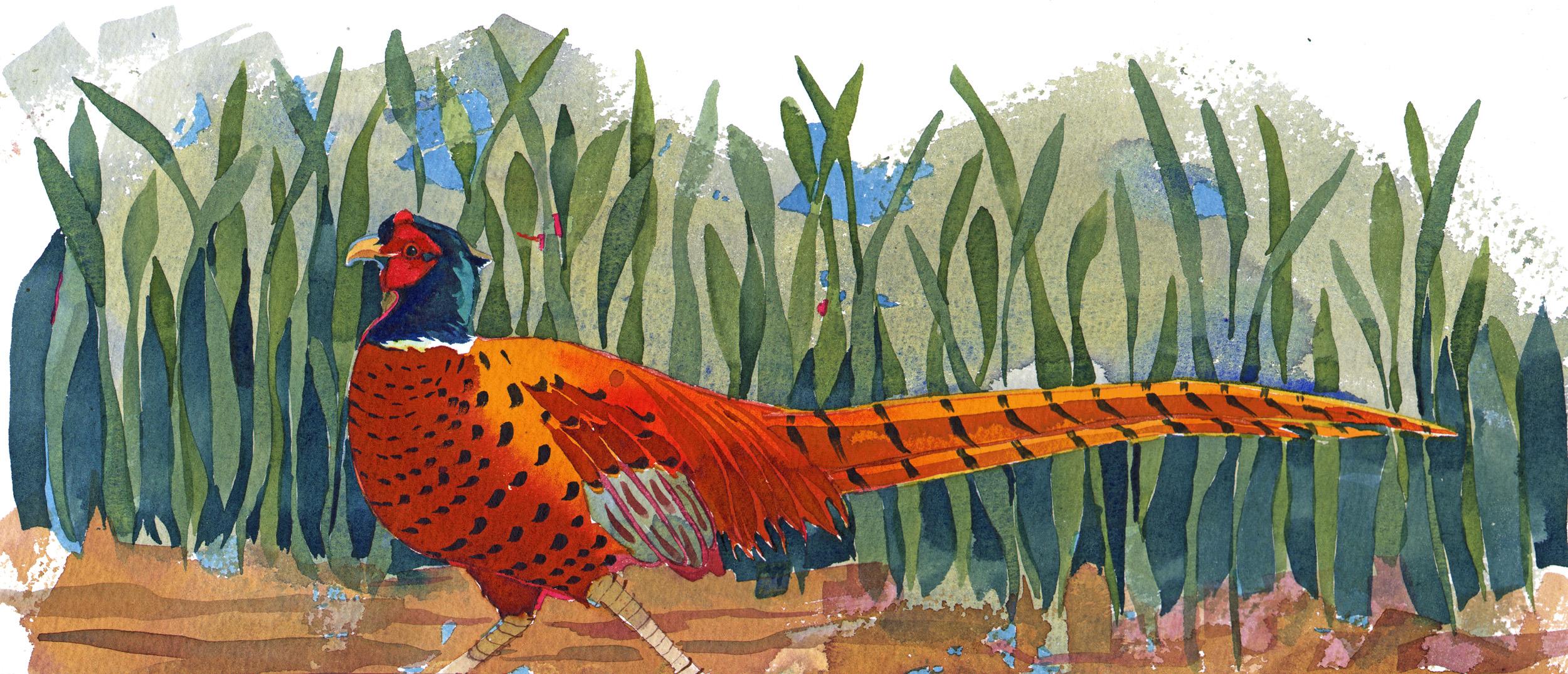 Pheasant I image
