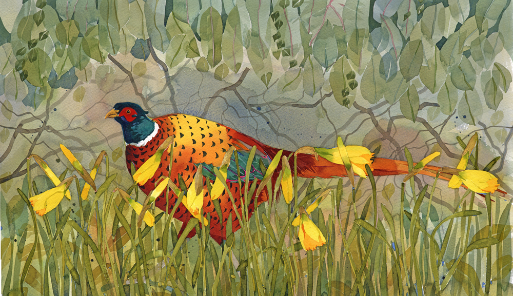 Pheasant in the daffodils SOLD  image