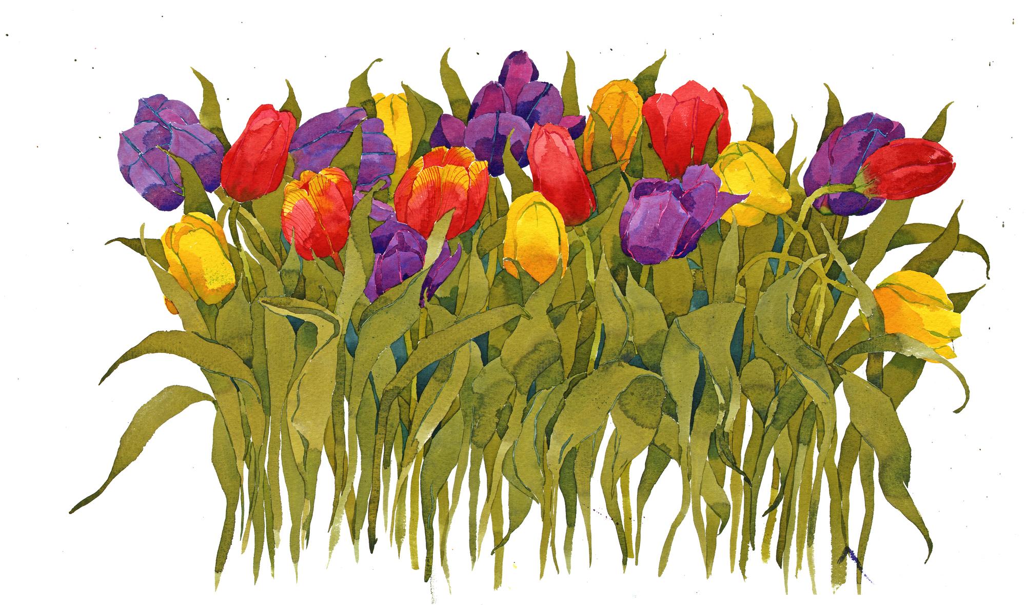 Mixed Tulips I image